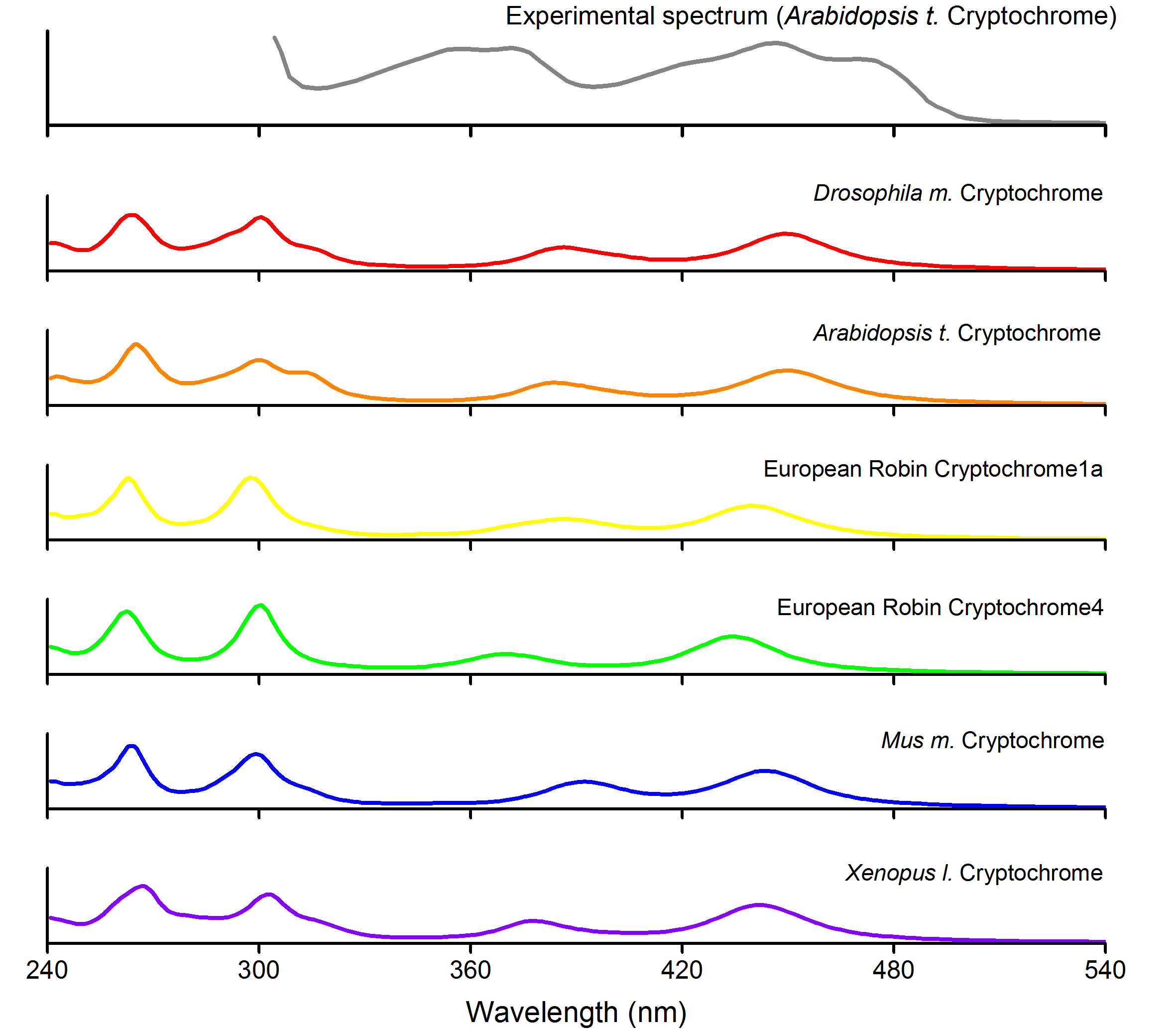 Calculated and experimental spectra of cryptochromes