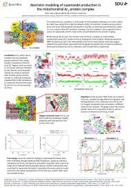 Atomistic modeling of superoxide production in the mitochondrial bc1  protein complex. Poster presented at the annual meeting of the Danish  Physical Society 2017. Peter Husen and Ilia A. Solov'yov.